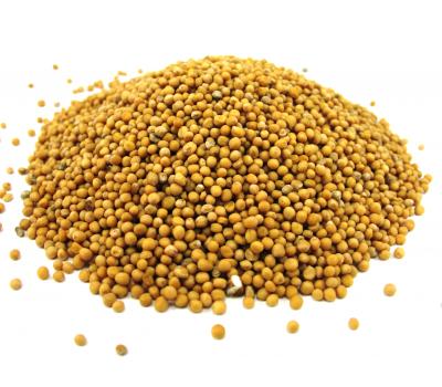 Семена белой горчицы фото